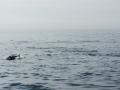 delta fishing ambiance 2