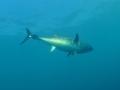 delta fishing ambiance 8
