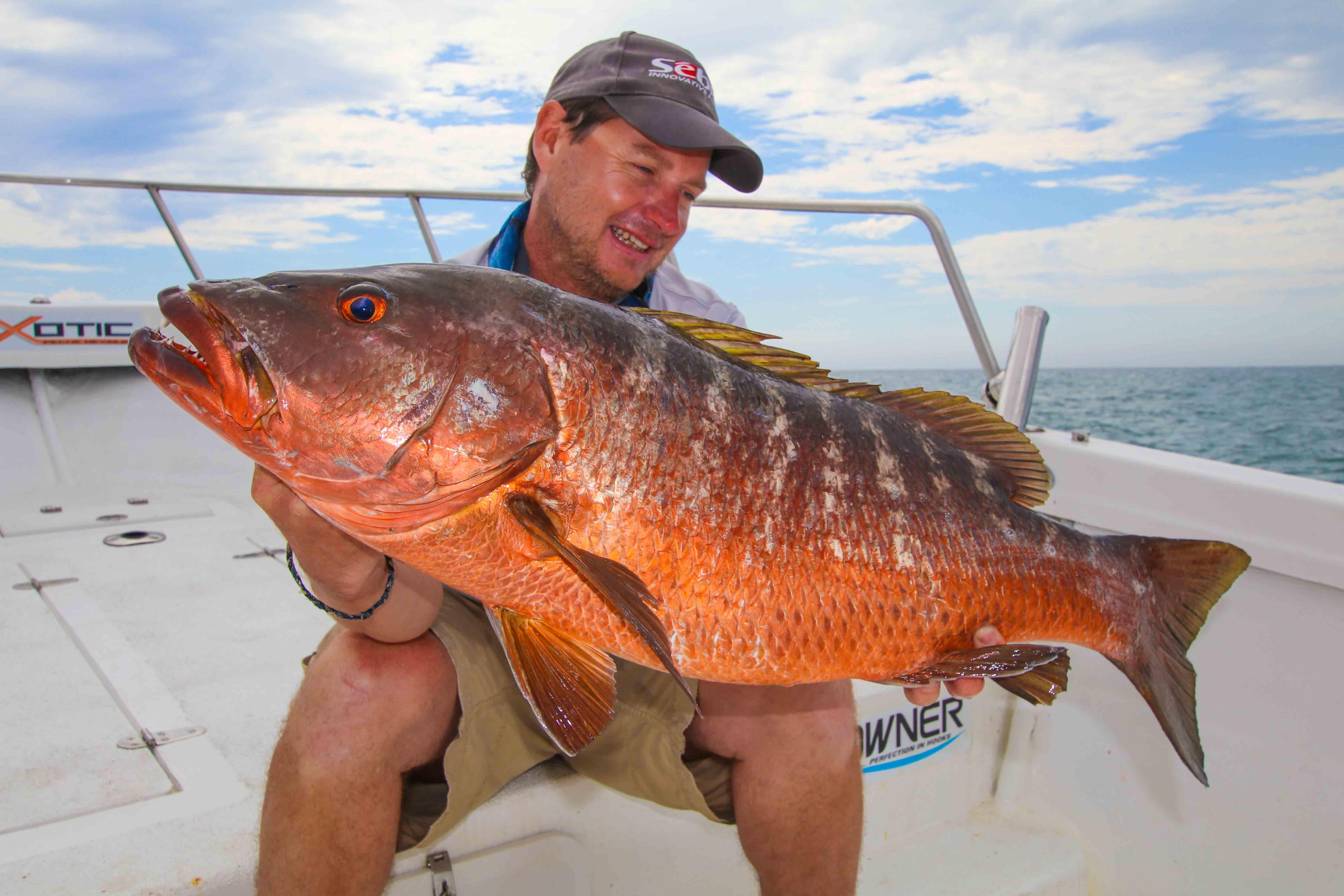 La p che aux p cheurs le thon 100 leurres d part pour for Gros poisson rouge