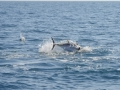 delta fishing ambiance 9