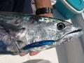 delta fishing fish in 2